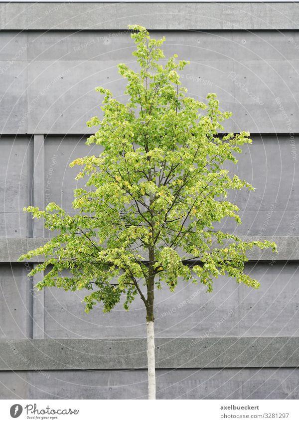 Baum vor Beton Fassade Design Umwelt Natur Pflanze Haus Gebäude Architektur Mauer Wand grau grün Betonwand Gegenteil minimalistisch modern Stadt Farbfoto