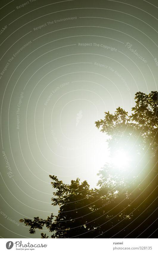Such a perfect day Freizeit & Hobby Ferien & Urlaub & Reisen Sommer Sonne Umwelt Natur Landschaft Tier Luft Himmel Wolkenloser Himmel Sonnenlicht Frühling