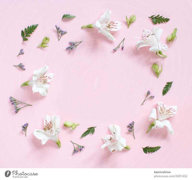 Frau weiß Blume Blatt Erwachsene rosa oben Design Dekoration & Verzierung Geburtstag Kreativität Hochzeit Mutter Blütenblatt Entwurf Valentinstag