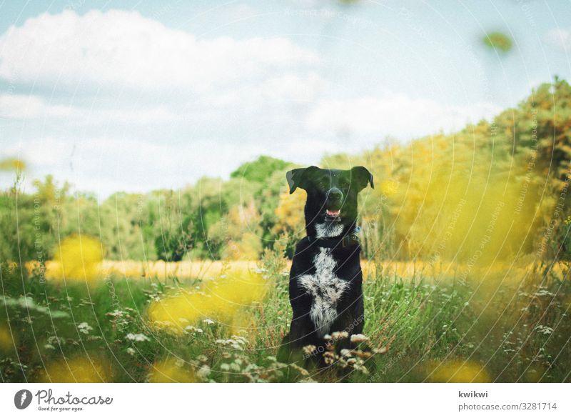 Hund auf Wiese I Natur Landschaft Pflanze Himmel Wolken Frühling Sommer Herbst Schönes Wetter Blume Gras Sträucher Blatt Blüte Grünpflanze Nutzpflanze