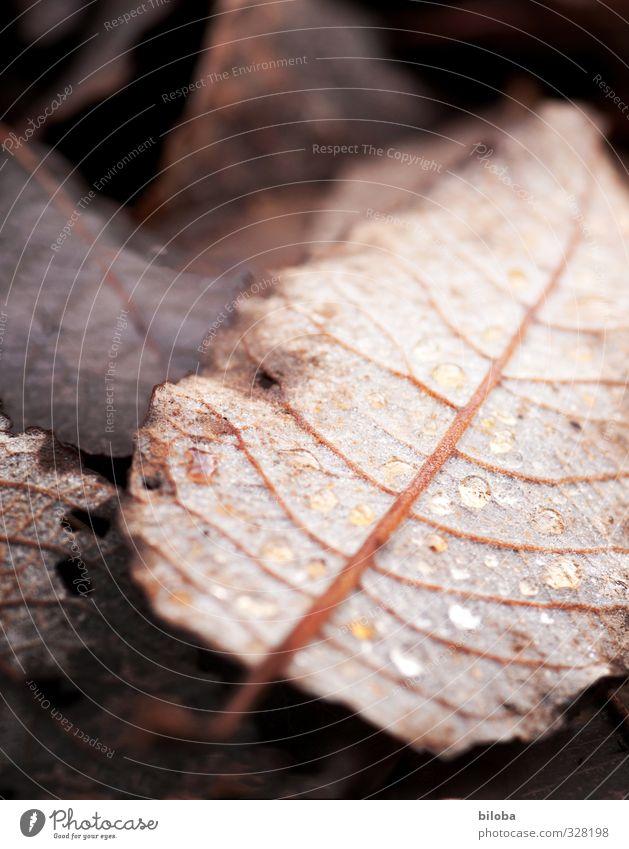 Blattwerk Natur Tier schwarz Herbst braun ästhetisch Wassertropfen Vergänglichkeit Trauer Tropfen Waldboden