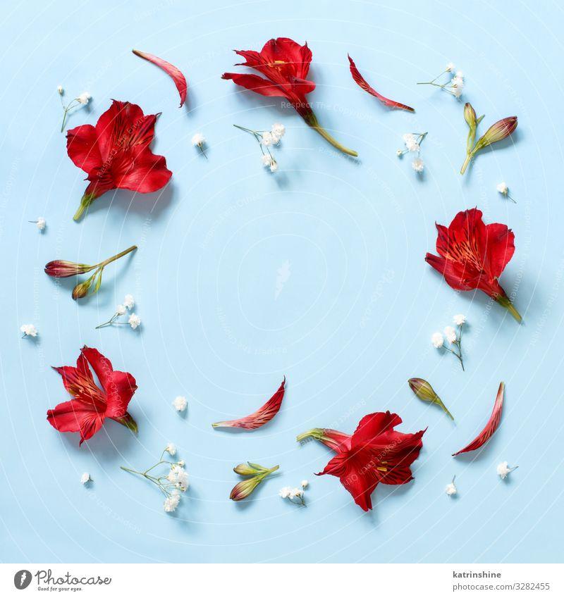 Frau blau weiß rot Blume Erwachsene Textfreiraum oben Design Dekoration & Verzierung Geburtstag Kreativität Hochzeit Mutter Blütenblatt Entwurf