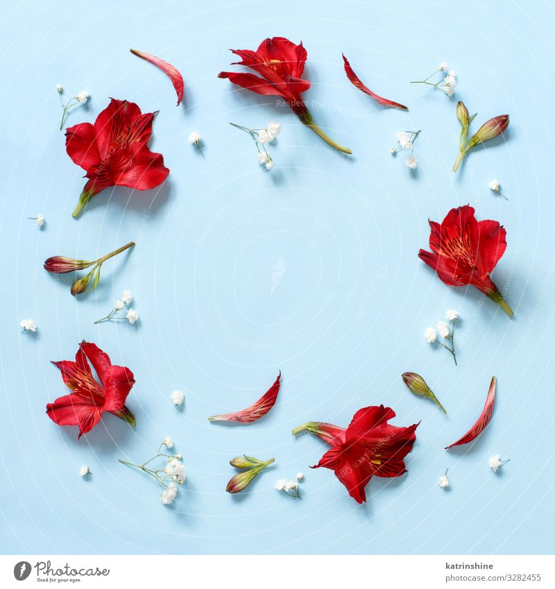 Rote Blumen auf hellblauem Hintergrund Design Dekoration & Verzierung Valentinstag Muttertag Hochzeit Geburtstag Frau Erwachsene oben rot weiß Kreativität