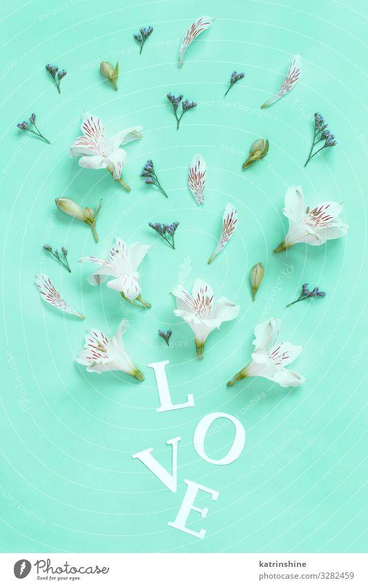 Blumen und das Wort LOVE auf hellgrünem Hintergrund Design Dekoration & Verzierung Valentinstag Muttertag Hochzeit Frau Erwachsene Schriftzeichen oben weiß