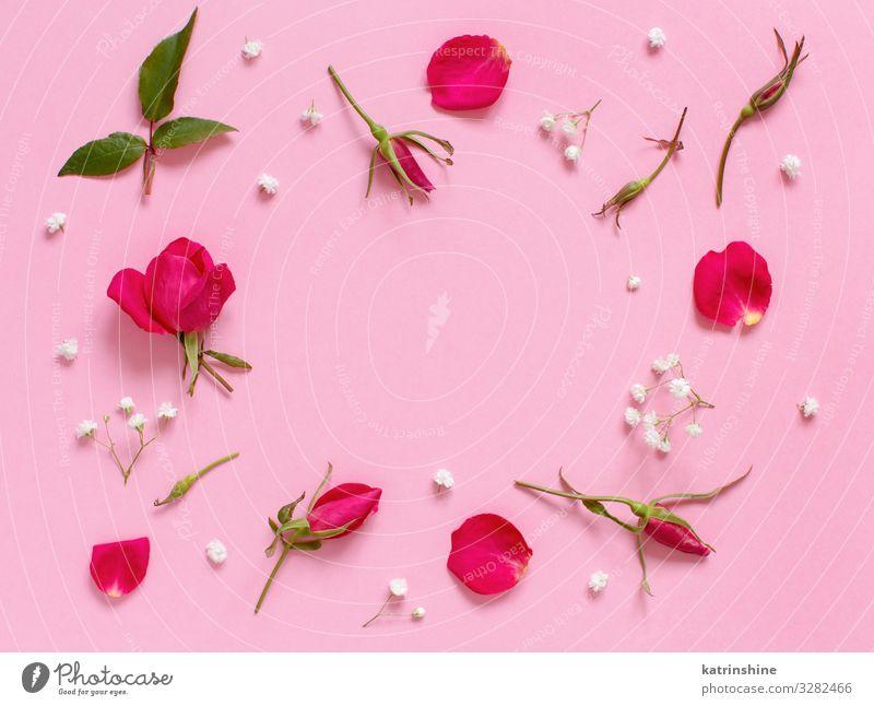 Blumen und Blütenblätter auf hellrosaem Hintergrund Design Dekoration & Verzierung Valentinstag Muttertag Hochzeit Geburtstag Frau Erwachsene Rose oben weiß