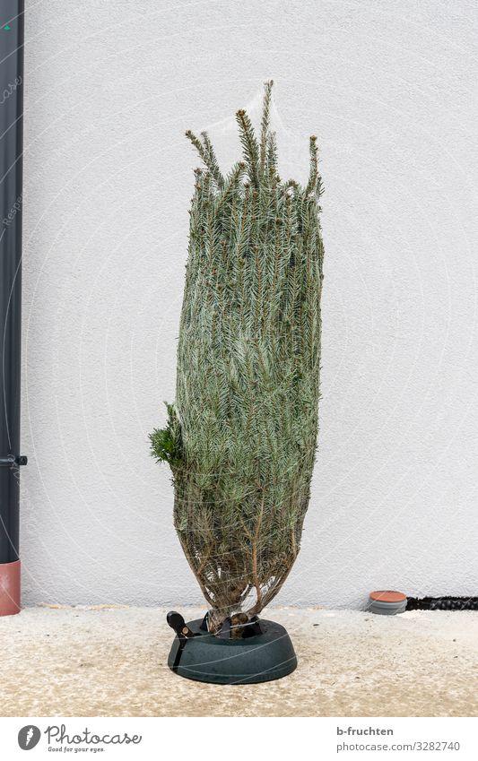 Baum im Sack Weihnachten & Advent Pflanze Anti-Weihnachten Religion & Glaube stehen Zeichen Netz Weihnachtsbaum Tanne Verpackung verschönern