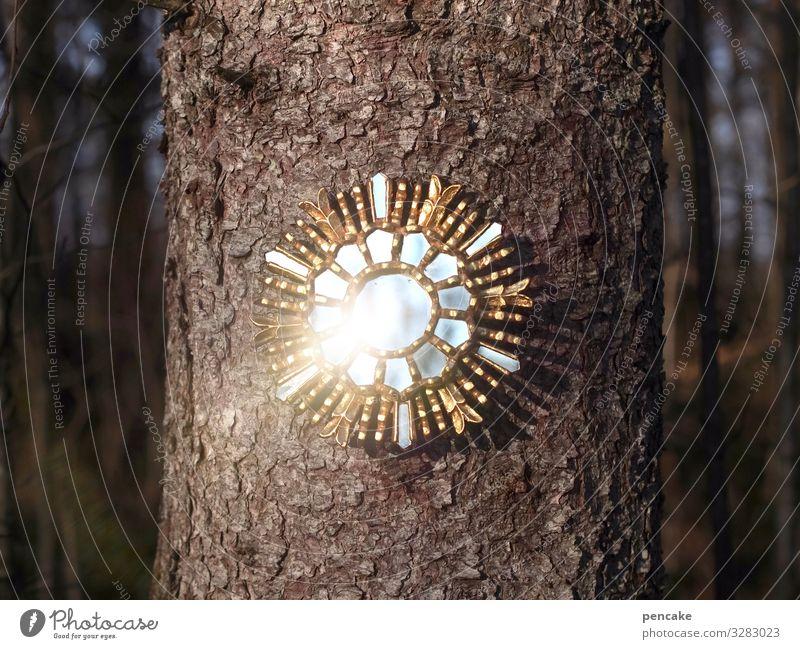 märchenspiegel elegant Design Glück Spiegel Kultur Natur Urelemente Sonnenlicht Winter Baum Wald Energie entdecken geheimnisvoll Kitsch Kunst Reichtum Macht