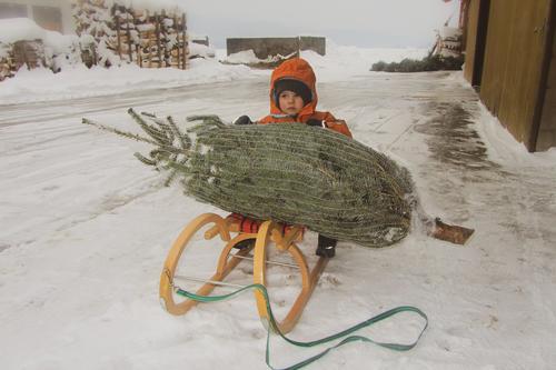 Damals Freude harmonisch Freizeit & Hobby Winter Schnee Weihnachten & Advent Kind Kleinkind Gesicht 1 Mensch Baum Mantel Mütze wählen kaufen festhalten sitzen