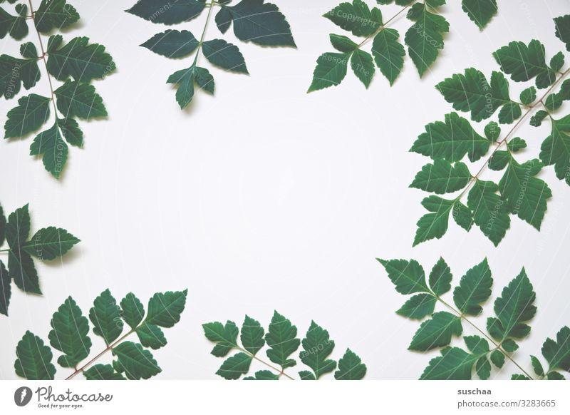 umrandetes weiss Rand Rahmen Dekoration & Verzierung grün Blatt Pflanze Kräuter & Gewürze Sträucher Blume Zierde Zweig Natur natürlich Textfreiraum Mitte