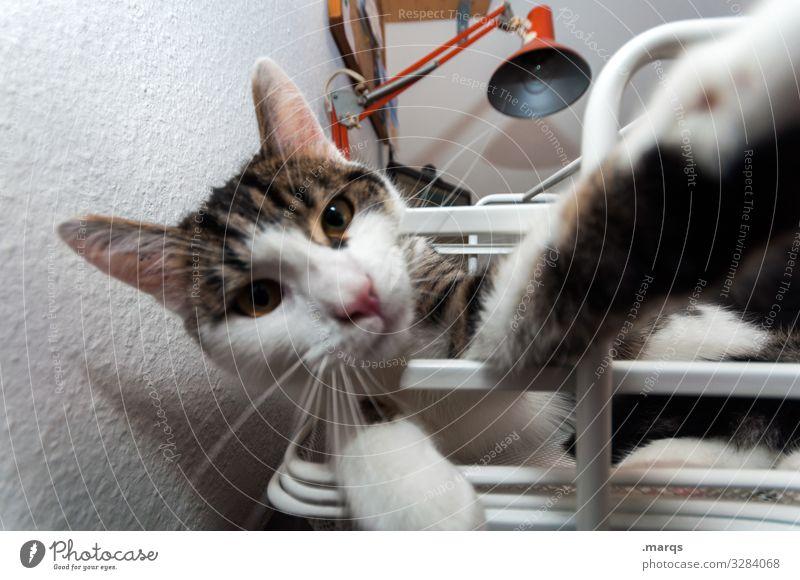 Der letzte macht das Licht aus Häusliches Leben Haustier Katze Tiergesicht Pfote 1 genießen liegen lustig skurril gemütlich Farbfoto Innenaufnahme Nahaufnahme