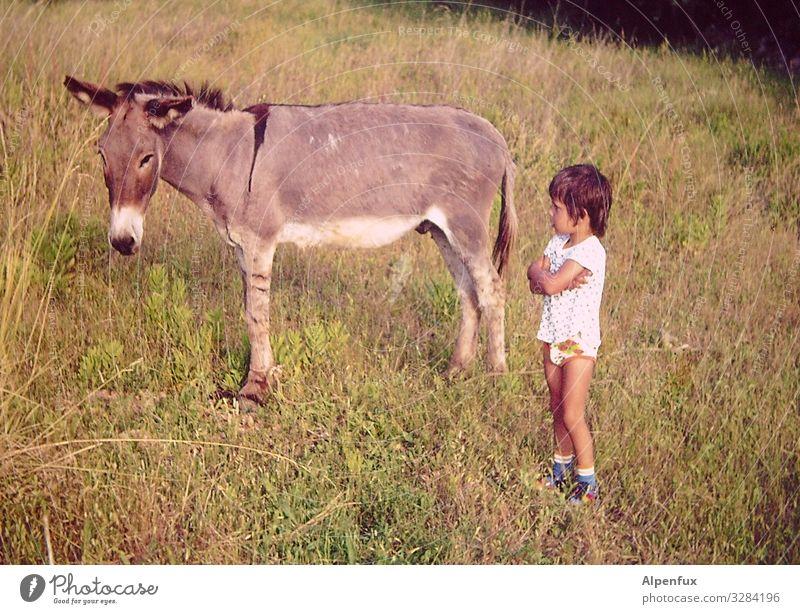Störrigkeits WM75 - Finale ! maskulin Kind 1 Mensch 3-8 Jahre Kindheit Tier Nutztier Esel beobachten Kommunizieren Blick Erfolg Kraft Willensstärke achtsam