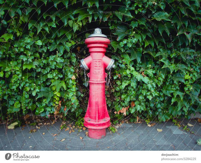 Rot trifft Grün. Ein Hydrant  auf einem Bürgersteig, in Rot. steht vor einer Grünen Hecke. Design harmonisch Sommer Umwelt Schönes Wetter Grünpflanze Straße