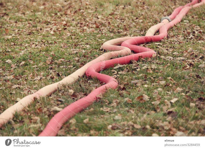 Wasser marsch! Feuerwehr Herbst Wiese Löschschlauch Schlauch schlangenförmig liegen rot Sicherheit Schutz Verantwortung Verlässlichkeit Design Netzwerk