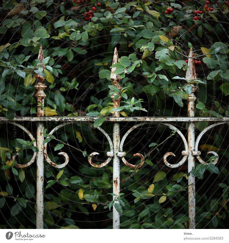 Geschichten vom Zaun (62) | UT HH 10.19 Handwerk Pflanze Sträucher Dekoration & Verzierung Rost Metall Linie alt dunkel elegant Sicherheit Schutz Romantik