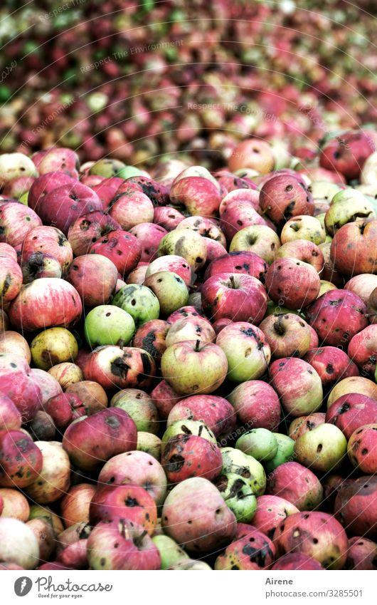 Esst mehr Obst! Gesunde Ernährung grün rot natürlich Frucht viele Ernte Bioprodukte Apfel Vegetarische Ernährung Diät Duft Vegane Ernährung saftig gefleckt