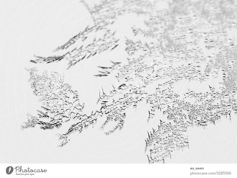 Eisblumen harmonisch Weihnachten & Advent Silvester u. Neujahr Umwelt Natur Wasser Winter Klima Frost frieren ästhetisch authentisch hell nah natürlich schwarz