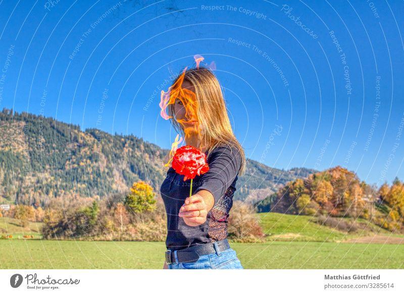 Feuerrose Natur schön Landschaft feminin außergewöhnlich frei blond Kraft Abenteuer Schönes Wetter einzigartig Coolness Macht Rose Wolkenloser Himmel