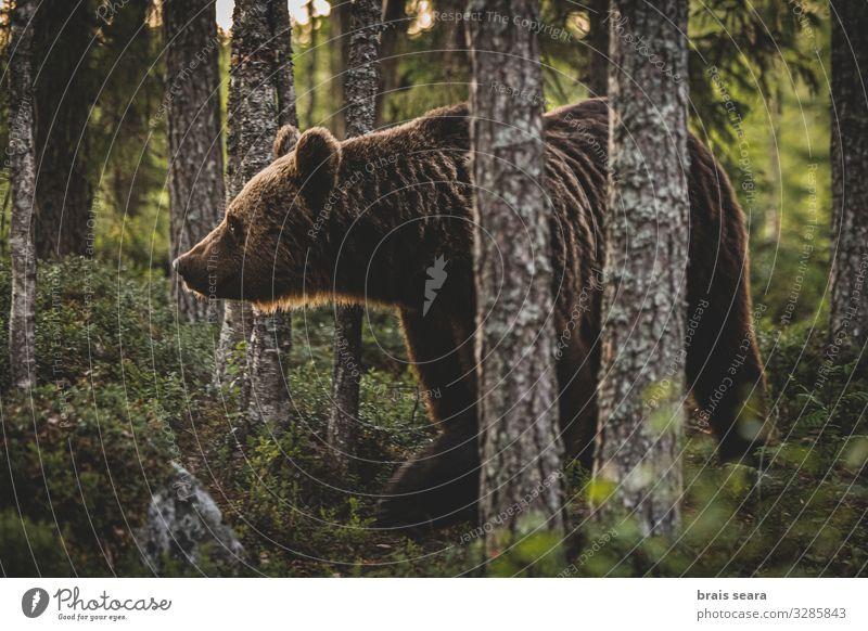 Natur Landschaft Baum Tier Wald Erwachsene Umwelt natürlich Freiheit braun Erde wild Angst Wetter Europa Wildtier