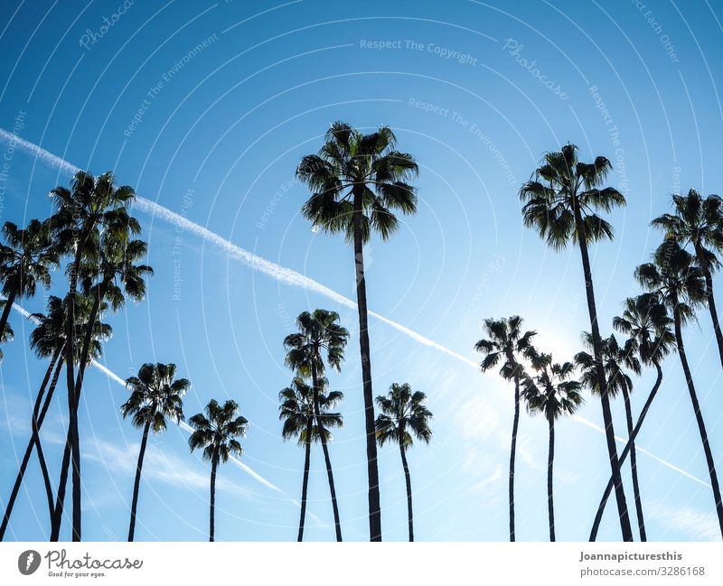 Tropical exotisch Erholung Ferien & Urlaub & Reisen Tourismus Ferne Sommer Sommerurlaub Natur Himmel Klima Schönes Wetter Baum Palme Strand Oase tropisch Urwald