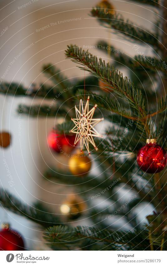 Weihnachtsbaum Weihnachten & Advent Lifestyle leuchten authentisch Stern (Symbol) Zeichen harmonisch Reichtum Schmuck Accessoire achtsam