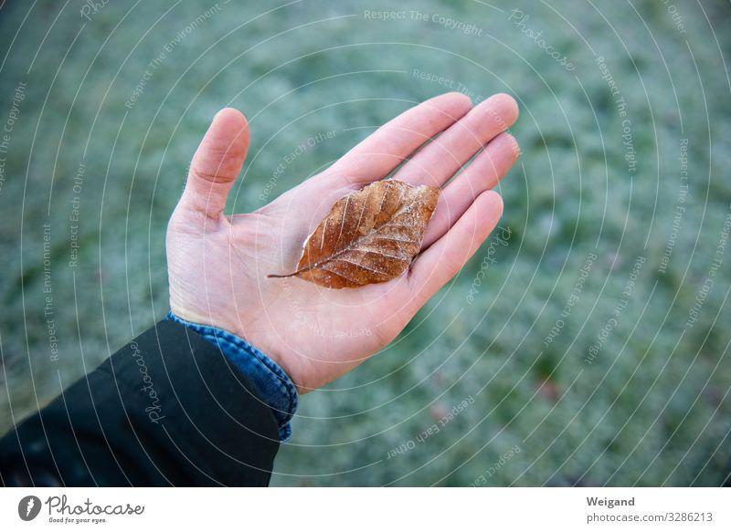 Frost harmonisch Wohlgefühl Zufriedenheit Erholung ruhig Meditation Hand Umwelt Natur Urelemente Herbst Winter tragen träumen Traurigkeit Sympathie Freundschaft