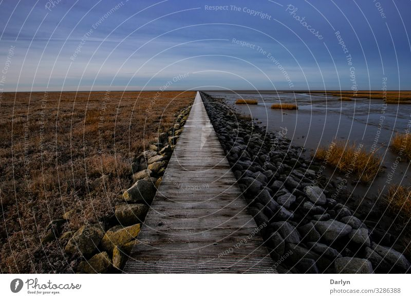 Langer Weg Umwelt Natur Landschaft Pflanze Tier Urelemente Sand Wasser Himmel Wolkenloser Himmel Horizont Sonne Sonnenlicht Winter Klima Wetter Schönes Wetter
