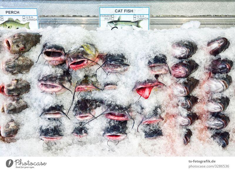 Ein weiteres Argument für Vegetarismus / Veganismus Lebensmittel Fisch Ernährung kaufen Wirtschaft Gastronomie Fischereiwirtschaft Fischgeschäft Fachgeschäft