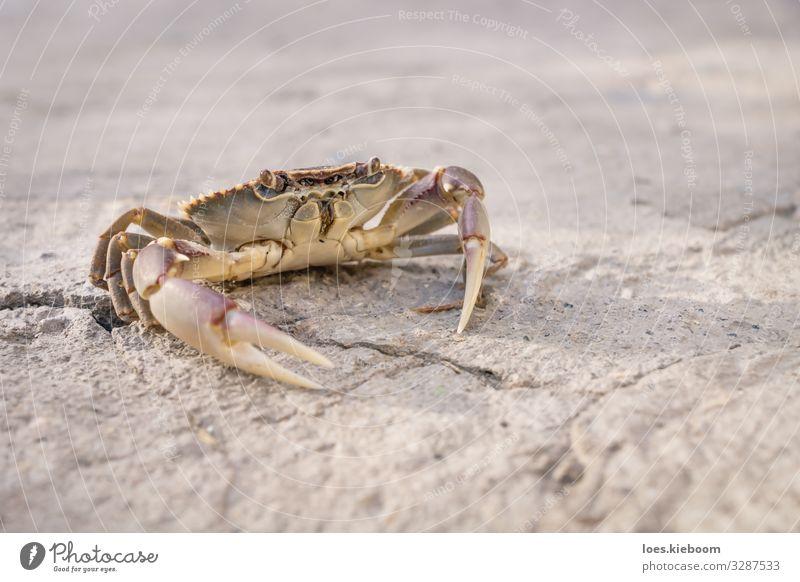 Posing lake crab Leben Ferien & Urlaub & Reisen Ferne Sommer Natur Sand See Tier Tiergesicht Krebstier 1 gelb Fernweh wildlife Hintergrundbild small stone