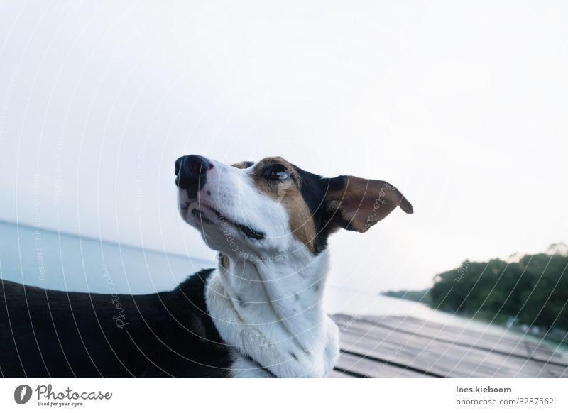 Dog posing like a model at a lake pier Stil Ferien & Urlaub & Reisen Sommer Natur See Tier Hund Tiergesicht 1 Bekanntheit Coolness elegant einzigartig schön
