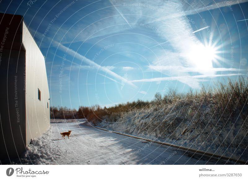 da bin ich schomma im winterland unterwegs ... Himmel Hund Landschaft Sonne Haus Winter Wand kalt Schnee Gebäude Schönes Wetter Kondensstreifen