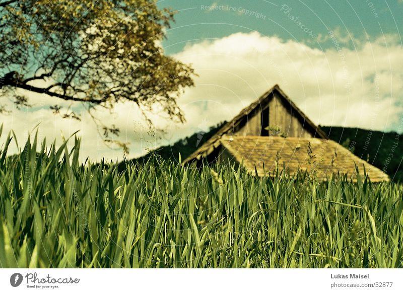 (-été-) Sommer Gras Baum Wolken Haus Scheune Feld Himmel