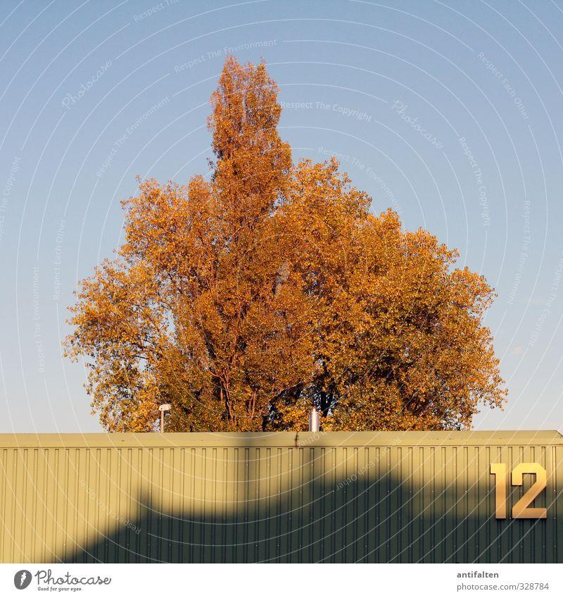 12 Natur Sommer Herbst Baum Blatt Stadtrand Gebäude Lagerhalle Metall Ziffern & Zahlen hängen ästhetisch blau braun gelb grün Zufriedenheit