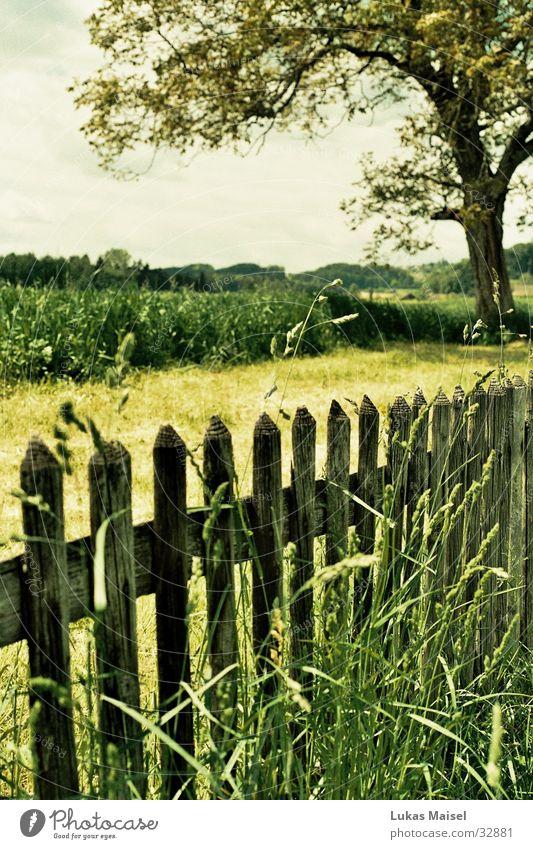 [spring] Baum grün Sommer Farbe Gras Frühling Landschaft Feld Zaun