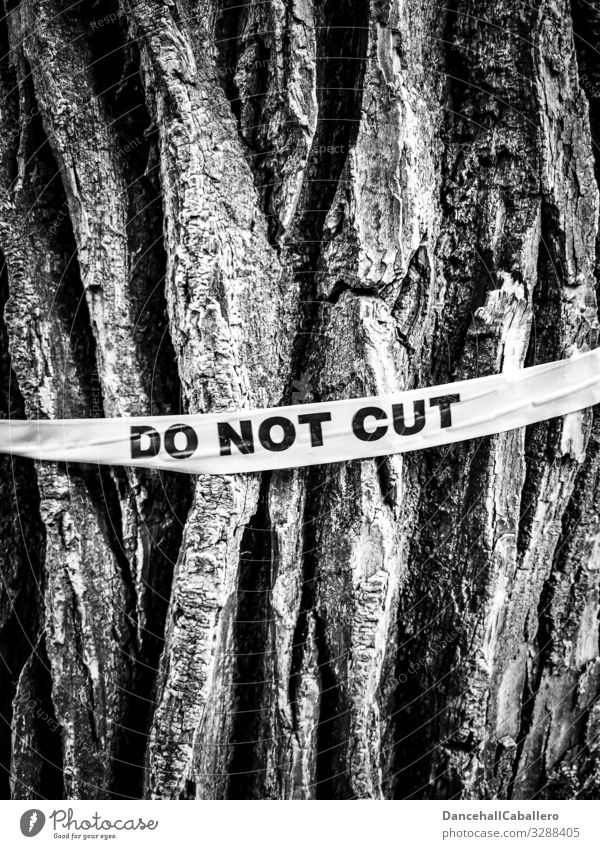 Baumstamm mit Schriftzug nicht fällen Holz Pflanze Baumrinde Abholzung Umwelt Wald Natur Verantwortung ignorant Schutz Klima Wandel & Veränderung Klimaschutz