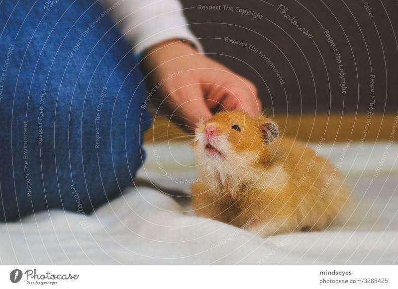 Einen Hamster hinter den Ohren kraulen Freizeit & Hobby Wohnung Arme Beine 1 Mensch Jeanshose Haustier Tier berühren festhalten hocken Kommunizieren