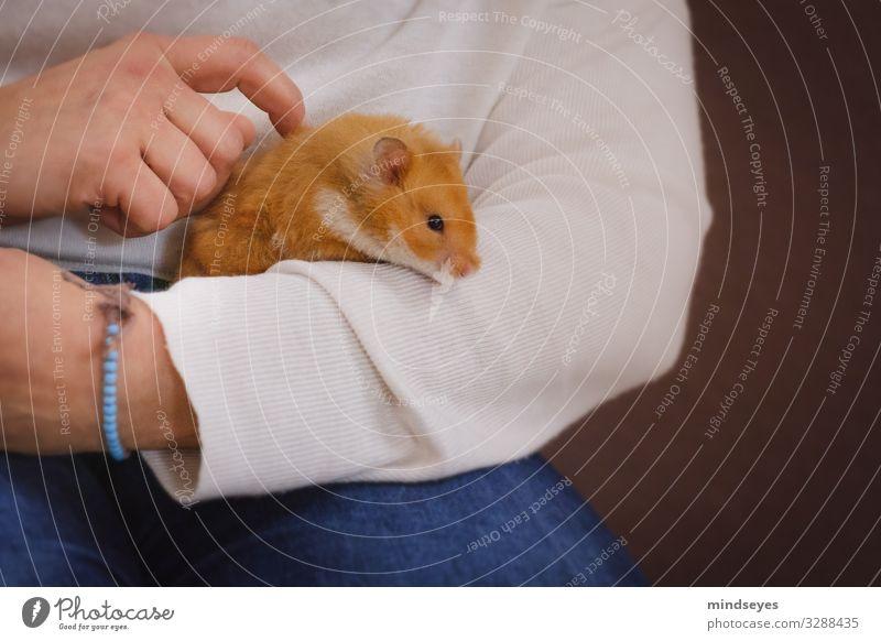 Einen Hamster in den Arm nehmen Freizeit & Hobby Wohnung Arme Hand 1 Mensch Jeanshose Armband Haustier Tier beobachten berühren festhalten Spielen tragen