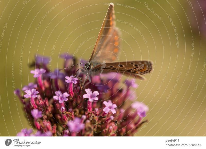abgehoben / kurz davor Ausflug Abenteuer Umwelt Natur Pflanze Tier Sonne Sonnenlicht Frühling Sommer Blume Blüte Garten Park Wiese Wildtier Schmetterling