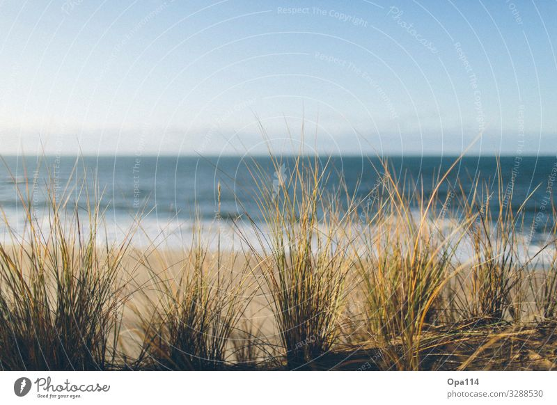 Meeresbrise Umwelt Natur Landschaft Pflanze Tier Sommer Klima Wetter Schönes Wetter Wellen Küste Strand Bucht Nordsee Insel atmen Blühend wandern frei blau grün