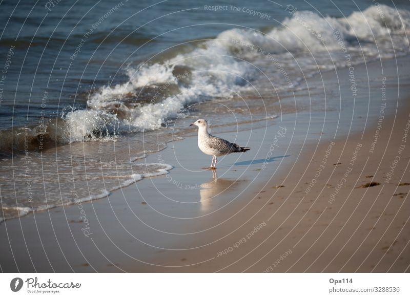"""Möwe Umwelt Natur Landschaft Wasser Sonne Sommer Schönes Wetter Strand Meer Insel Tier Wildtier 1 einzigartig """"Freiheit Nordsee Sylt Eiland Gefieder Brandung"""