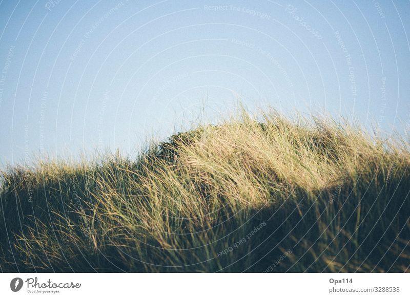 """Düne Umwelt Natur Landschaft Pflanze Tier Himmel Sonne Sommer Herbst Wetter Schönes Wetter Nutzpflanze Küste Nordsee Meer Insel wandern Glück blau grün """"Sylt"""