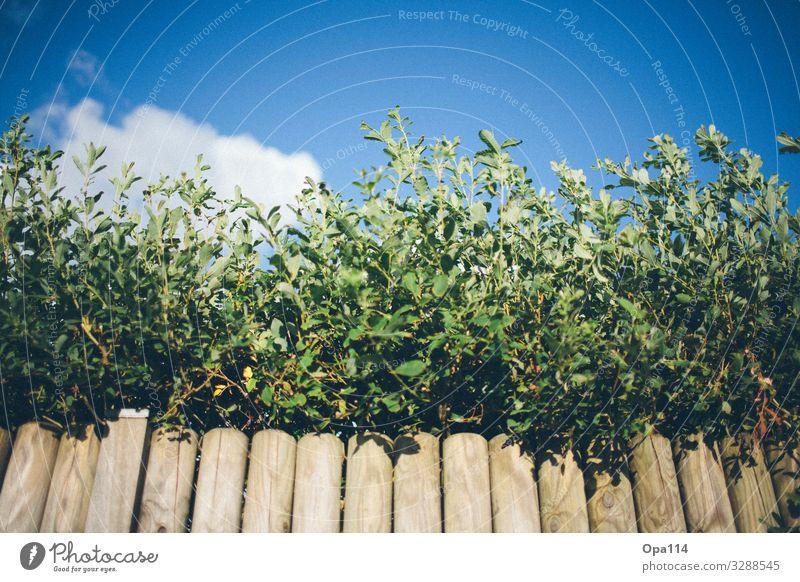 Sky is no limit Natur Himmel Wolken Frühling Sommer Herbst Klima Klimawandel Wetter Schönes Wetter Pflanze Blatt Blüte Grünpflanze Holz atmen Blühend Duft