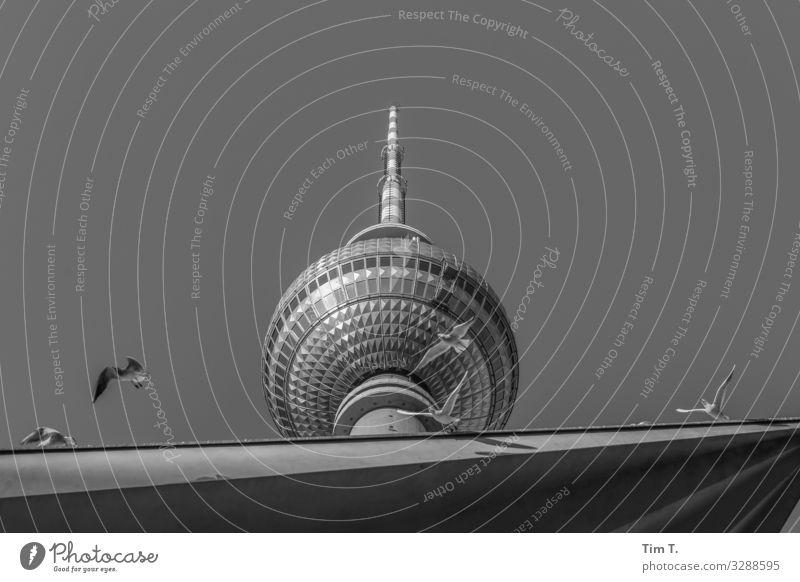 Berlin Alexanderplatz Stadt Hauptstadt Stadtzentrum Menschenleer Bauwerk Gebäude Architektur Fernsehturm Tier Vogel Taube Tiergruppe Schwarm Tourismus Umwelt