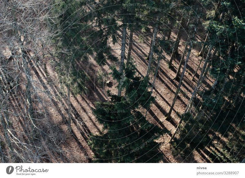 Nadelwald von oben Wald Nadelbaum Vogelperspektive Natur Farbfoto Baum Außenaufnahme Menschenleer Landschaft Umwelt Pflanze Licht Tag grün Sonnenlicht