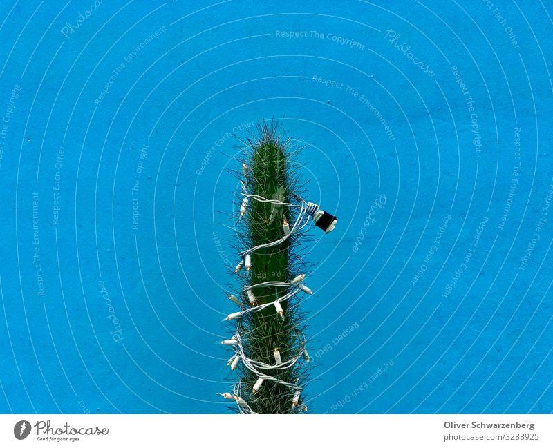 Weihnachtsbaum in der Karibik Tourismus Weihnachten & Advent blau grün Kaktus Wand Farbfoto Außenaufnahme Menschenleer Textfreiraum links Textfreiraum rechts