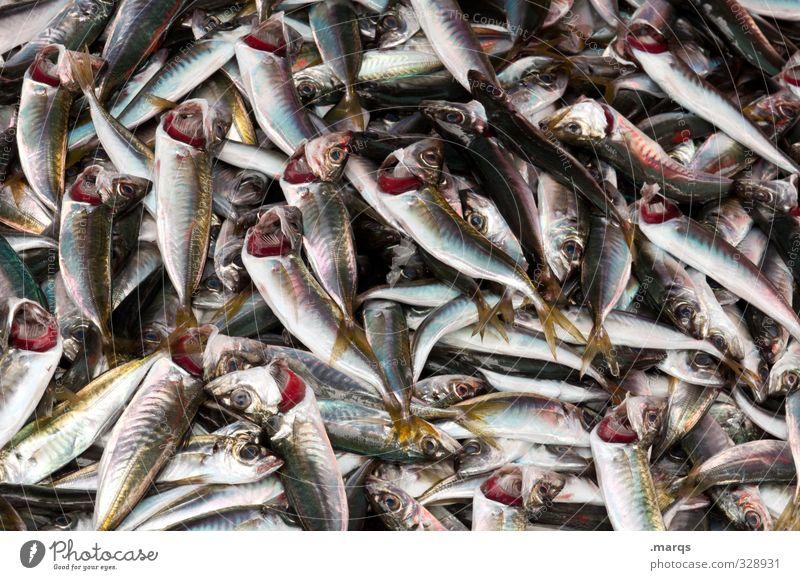 Fische Lebensmittel Ernährung Bioprodukte liegen viele Marktstand Mittagessen frisch Tier Nutztier Fischereiwirtschaft Haufen Qualität nass Übelriechend