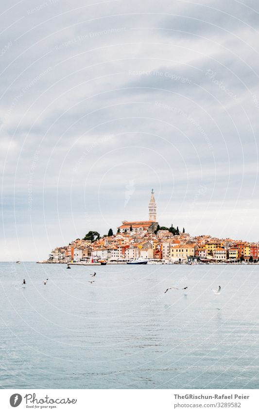 Rovinj Stadt grau orange schwarz Kroatien Meer Vogel Möwe Kirche Aussicht Reisefotografie Wolken Farbfoto Außenaufnahme Menschenleer Textfreiraum oben