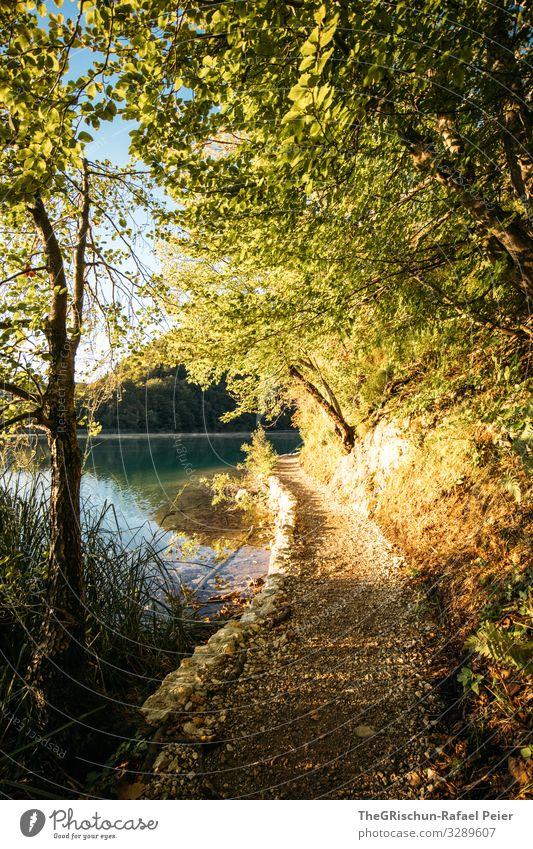 Plitvicer Seen Umwelt Natur blau gelb gold türkis Steg Wege & Pfade Küste Baum plitvicer seen Nationalpark wandern Kroatien Farbfoto Außenaufnahme Menschenleer