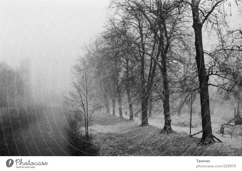 Silent Snow Landschaft Winter Schnee Schneefall Pflanze Baum Sträucher Park Flussufer authentisch Leben Schwarzweißfoto Außenaufnahme Menschenleer Tag Schatten