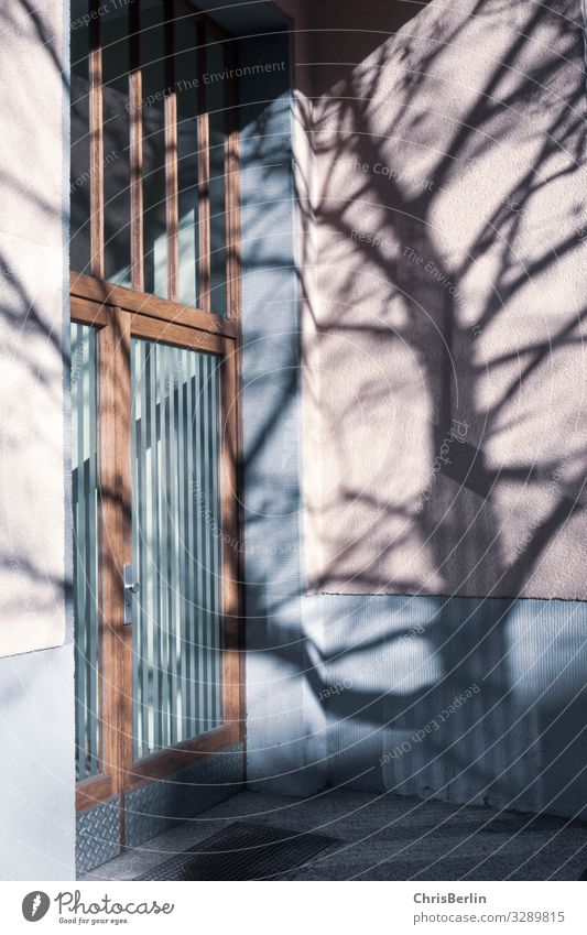 Schatten von einem Baum auf der Hauswand Architektur Stadt Gebäude Wohnhaus Mauer Wand Fassade Tür Stein Glas Häusliches Leben ästhetisch authentisch Sicherheit