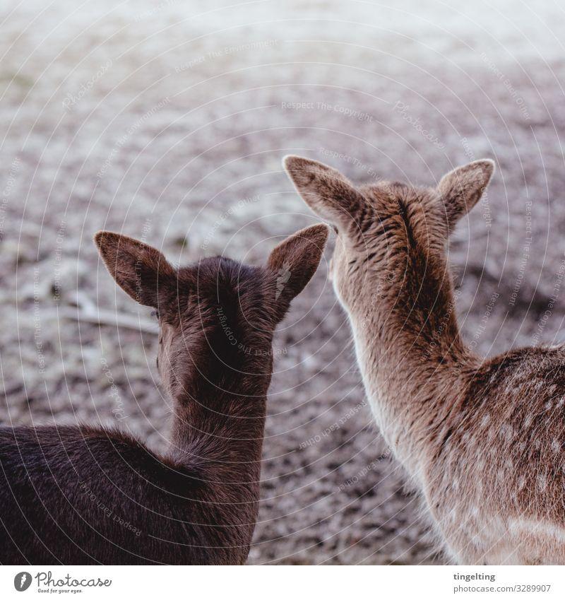 Observer Rehe Natur Wiese Feld Tier Wildtier 2 beobachten Zusammensein nah braun Rehkitz Hinterkopf Freundschaft Wildpark weich Ohr gepunktet beige Farbfoto